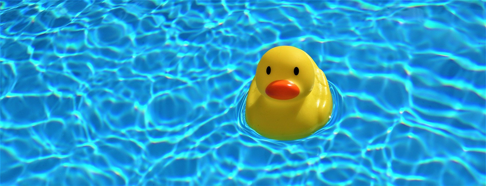 Ente in Pool